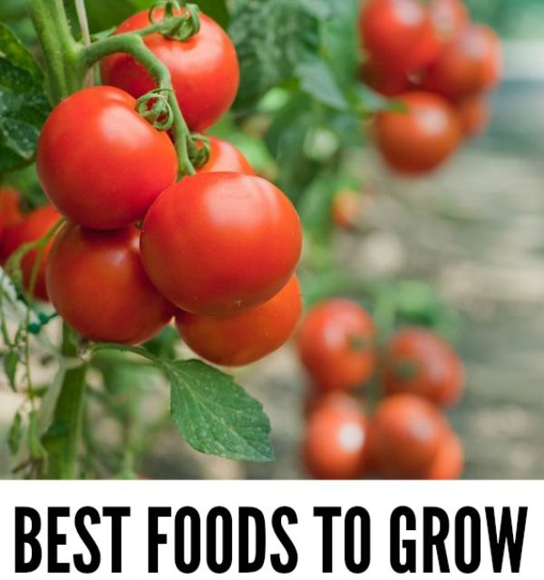 Gardening for Beginners: Best Foods to Grow First