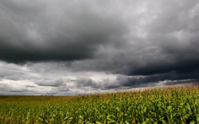 Marshall sees crop insurance as core risk-management tool