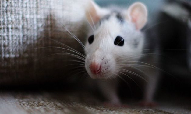 How to Get Rid of Mice — And Keep Them Away for Good