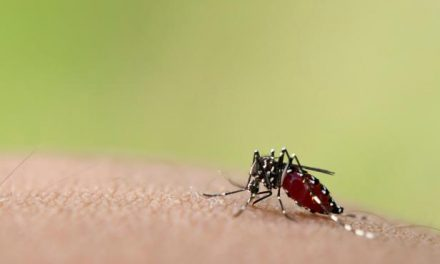 9 Mosquito Myths Debunked