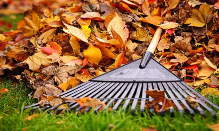 A SEASONAL GUIDE: FALL LAWN AND LANDSCAPE CARE