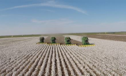 The Harvest Is Plentiful!