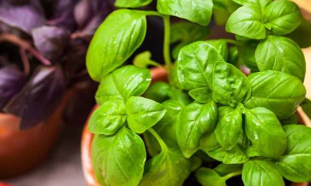 The 8 Best Vegetables and Fruits to Grow Indoors