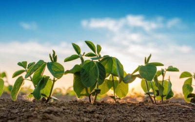 No time to panic over Chinese soybean tariffs