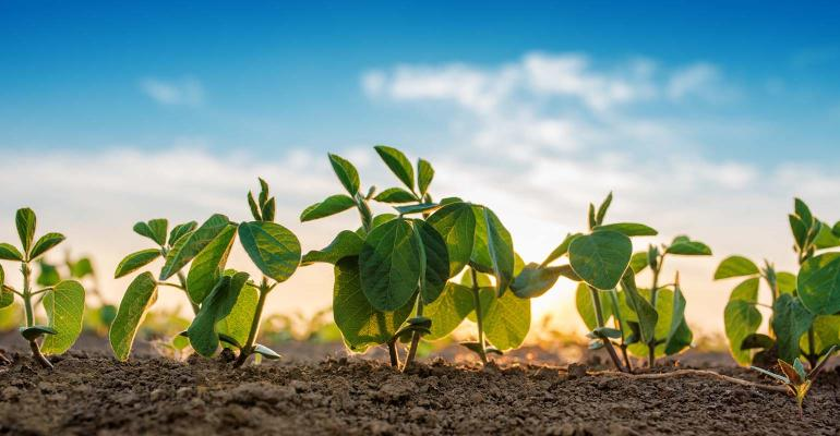 USDA crop progress: Corn, soybean quality buck expectations