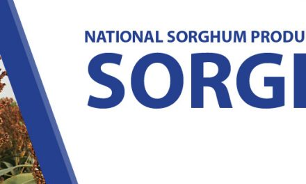 National Sorghum Producers The voice of the sorghum industry