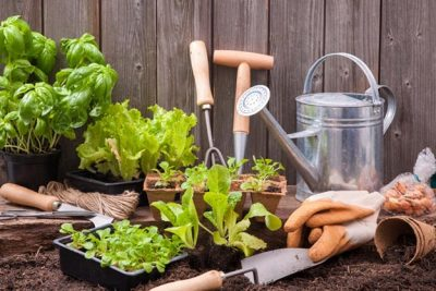 DIY Projects » 5 Lawn and Garden Tips for First-Time Homeowners