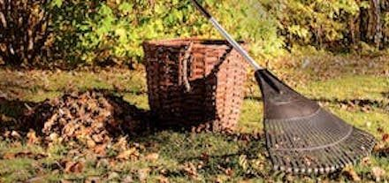 11 Fall Gardening Tips: Know what to reap and sow for a great garden all year.