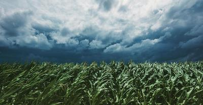 Is Big Ag helping to tame climate change?