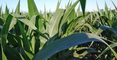 Startup to innovate crop breeding