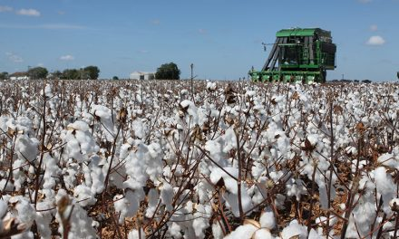 Cotton insurance, marketing workshop scheduled Feb. 12 in Canyon