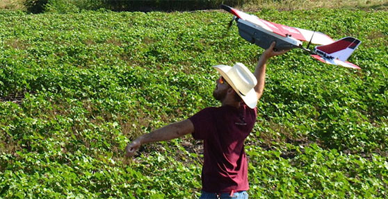 Using Drones to Detect Cotton Root Rot Disease